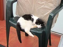 IMG_6243 (Chat Malicieux) Tags: cat katze joana