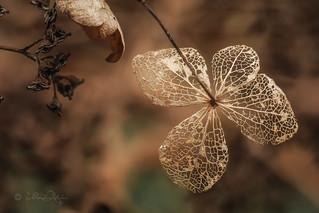 Winterkunst / Winter art (Explored...thank you so much!) ♥