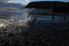 170129 St Bees 02 (John - Nash) Tags: st bees stbees cumbria westcumbria lakedistrict beach sky cloud blue white before sunsrise landscape seascape beachscape sea water waves foam wideangle canon dog labradoodle bouncing excited