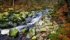 Running Stream Dec 2016 (kckelleher11) Tags: 1240mm 2016 ireland olympus december em1 filter flowing nd omd river running stream streamd water wicklow