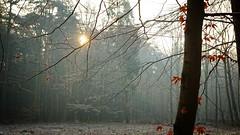*** (pszcz9) Tags: polska poland przyroda nature natura las forest forestimages drzewo tree gałąź branch pejzaż landscape grudzień december słońce sun mgła fog mist poranek morning zima winter beautifulearth sony a77