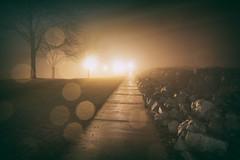 0142 (1nfinite) Tags: bokeh rain fog trees rocks path sidewalk highlights bright light leak