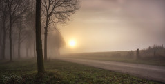 Endless (Fragile Decay) Tags: nature road sunrise fog netherlands fence trees fragiledecay