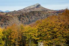 EFO_1830.jpg (edouardfourcade) Tags: arbres trees paysage landscape montagne light izarrieta lumiere colors basque automne yellow fall mountain