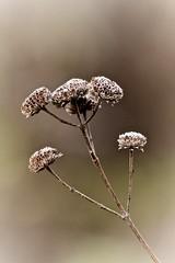 December Bouquet (Sine--Qua--Non) Tags: nature outdoors winter leaf leaves macro fall autumn
