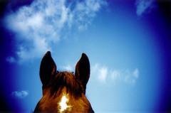 horses #12 (lomokev) Tags: blue sky horse animal clouds lomo lca xpro lomography crossprocessed xprocess country lomolca agfa jessops100asaslidefilm agfaprecisa lomograph densole agfaprecisa100 cruzando precisa jessopsslidefilm publishedinjpg rota:type=showall rota:type=composition file:name=bgen3123 use:on=moo rollnamebgen31 image:selection=tombing
