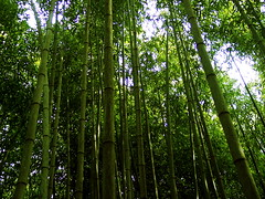 Bamboo Field Day - by 3rd Wheel