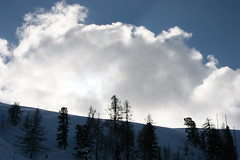 Big cloud small trees