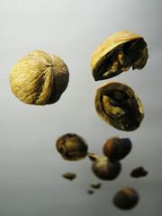 Going nuts (mrjorgen) Tags: stilllife flying walnut nuts stilleben nut portfolio airborne cracked hazelnut weightless mappe nøtter nøtt mappevisning minicardkandidat moocardkandidat