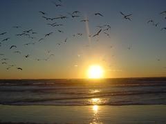 DSC07171 (Watts4) Tags: ocean sunset seagulls reflection beach carr ray northcarolina watts baldheadisland