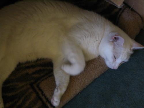 Timin napping