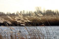windforce six (dirk huijssoon) Tags: holland op polder broek northholland westfriesland broekoplangedijk langendijk broekoplangendijk