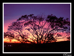 Solaris Sunrise Tree (Gabriel Cavedon) Tags: brazil sky tree nature brasil sunrise natureza cu rave rvore raves solarisfestival cavedon