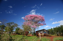 Lapacho Negro (R&R Finn) Tags: pink blue trees red wallpaper sky house green 2004 southamerica nature topf25 argentina canon rebel honeymoon 300d indian poor wideangle explore tlpoedeleted tropical indians shack weeklysurvivor iguazu indigenous shootingwhiledriving