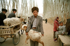 road to hotan (themexican) Tags: uigyur man sheep xinjiang people silkroad