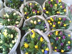 Bloemenstal (Roel) Tags: flowers nokia6630