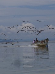 Pelicans and fishermen (matthijs rouw) Tags: pelicans costarica fishermen casio puntarenas casioqv3000ex casioqv3000 qv3000ex qvex3000exir casioqv3000exir
