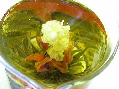 jasmine tea tree