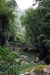 minnamurra rainforest (Rob Barker) Tags: minnamurra rainforest green trees footbridge bush bushwalking hiking trail australia newsouthwales mostviewed topv1111