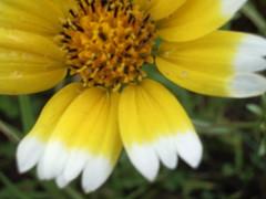 fork/petals (LauraElaine) Tags: elcerrito