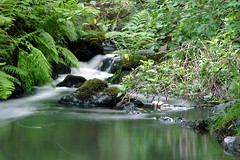 Falls & Ferns (Austin Henry) Tags: fern green creek landscape pond rocks britishcolumbia blurred victoria gallopinggoose millstream