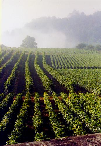La Rochepot, Hautes Cotes du Beaune