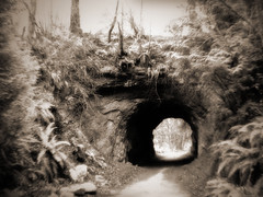 Sehome Arboretum Tunnel (Dave Ward Photography) Tags: 2005 trees usa nature forest landscape geotagged ir us washington holga bestof unitedstates hill arboretum tunnel unfound best trail infrared bellingham wa ferns whatcom sehome davewardsmaragd geo:lon=122482624 geo:lat=48735049 pss:opd=1110323082 pss:opd=1110147388