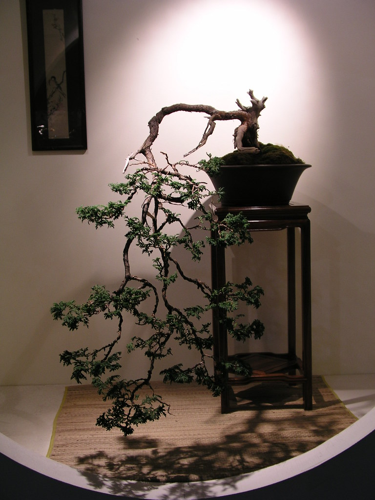 Weeping bonsai.