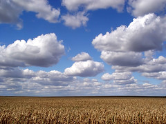 Clouds and corn