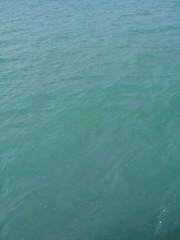 Sea of green - Worthing (andyaldridge) Tags: sea green worthing seasky colorhsvavg80658f colorhsvmed7f668f colorrgbavg578f90 colorrgbmed568f8e 0x578c8e