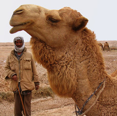 The CAMEL (Roozbeh Feiz) Tags: world life trip travel people eye face animal animals canon asian living persian eyes asia desert faces iran live muslim islam middleeast culture photojournalism documentary persia social adventure camel arab iranian oriental  cultures dq cultural islamic socialdocumentary arabs  khouzestan iranianstyle persianstyle ~vista iranianphotographer iranianphotographers    darquain