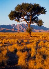 Sunset at Sossusvlei (Walter Quirtmair) Tags: film 2004 topf25 bravo desert dune flickrzen namibia swq sossusvlei namib thesource eos750 takenbysylvia