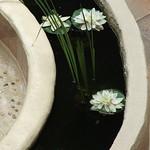 Lotus views... thumbnail