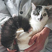 scared Momo (Tama) Tags: cat geotagged earthquake momo feline kitty geo:lat=339 geo:lon=1302