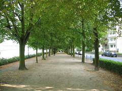 Banks of the Rhine, Bonn, Germany (Asten) Tags: trees summer bonn path background walkway bonngermany