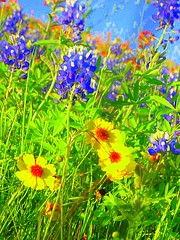 Texas Wildflowers [saturated]