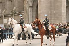 St. Patrick's Day Parade NYC 2005 (StarrGazr) Tags: nyc newyorkcity horse ny newyork nypd parade mounted stpatricksday stpartick spd2005nyc spd2005newyork starrgazrsown