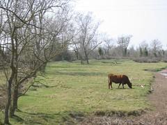 Vaca (estamosdeacuerdo) Tags: vaca aiguamolls emporda