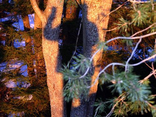 Guinness sunset shadow