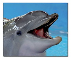 Ain't I Cute? (hodad66) Tags: animal water florida dolphin smile seaworld