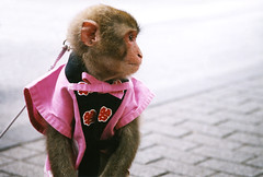 Patient (Lil [Kristen Elsby]) Tags: topf25 animal japan topv2222 mammal monkey tokyo asia dof bokeh profile jacket streetperformer  hibiya anthropomorphic macaque happi eastasia performingmonkey happicoat performinganimal   monkeydressedashuman  clotheswearingmonkey