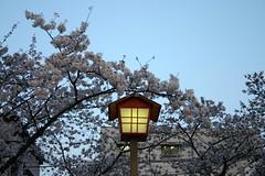 IMG_1511 (jippieeeeeeeeee) Tags: japan inazawa cherryblossom  kirschbluete