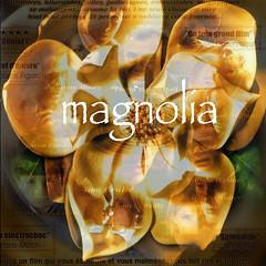 Magnolia (State Of Mind) Tags: magnolia movie film flower music aimee mann photoshop wise up