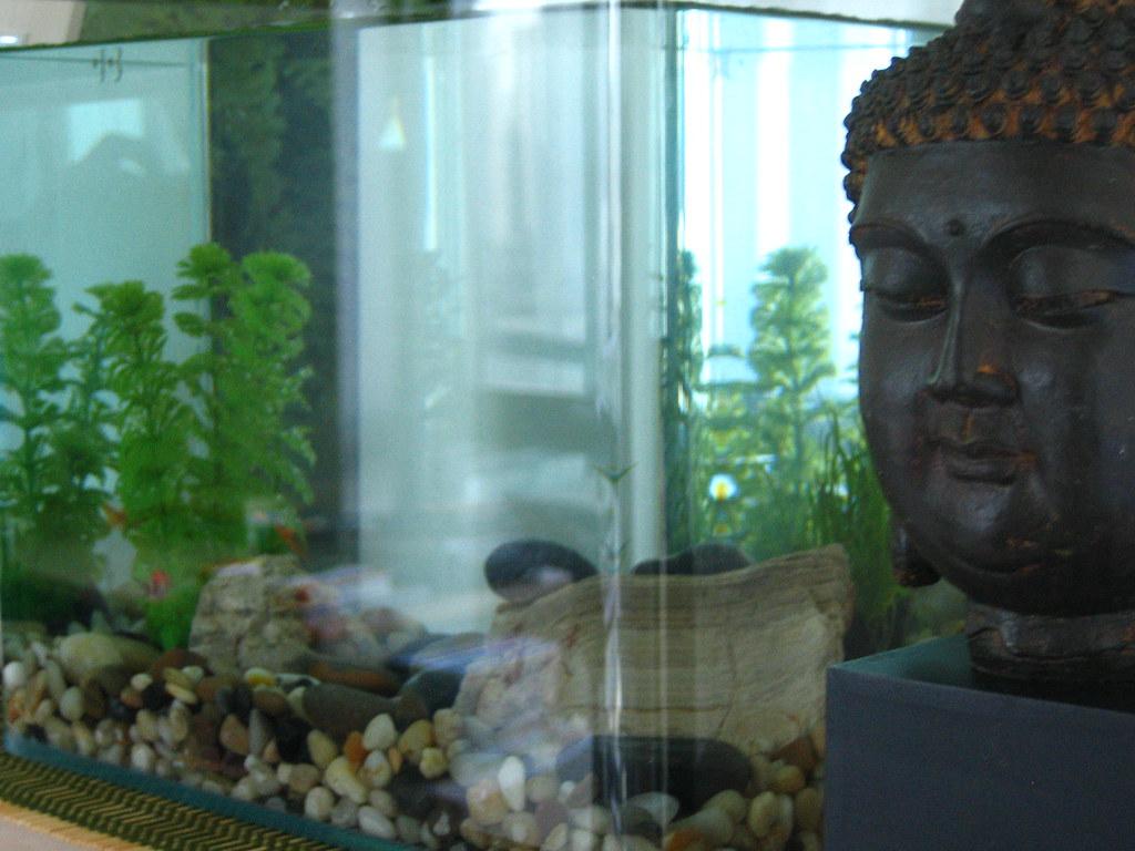 Aquarium Fish Tank - Canopy Parts - Pet Supplies
