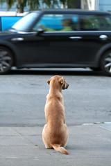 Zoom! (Automatt) Tags: dog motion blur car interestingness fav20 fav30 fav10 interestingness3 cyblee fave25 qoop06