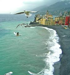 fuori dalla mia finestra (**luisa**) Tags: sea italy water birds seagull liguria camogli 116 i500 davidgettyimagesitaly gettyimagesitaly