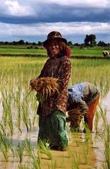 mujeres trabajando - by subcomandanta