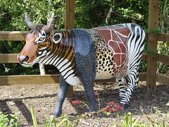 """Moo Zoo"" (Saveena (AKA LHDugger)) Tags: 15fav favorite art nature animal statue fauna ilovenature zoo cow all texas no tx houston lisa any h rights form fiberglass written without usage reserved allowed houstonzoo consent dugger ""© zoosofthesouth saveena"""