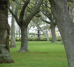 Kempner Park () Tags: park trees usa galveston tree green fountain grass island oak texas peace peaceful fotolog pavilion galvestonisland garten verein kempner gartenverein