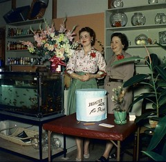 Grand Opening 0009 (Patrick Q) Tags: old flowers people 1955 retail vintage mississippi tickets store market kodak drawing antique space retro 1950s ms florist opening 50s kodachrome sell circa technicolor negativescan atomic petshop kodacolor oldfashioned oldfamilyphotos raffle filmscan petstore grandopening midcentury sellers pleasantville pre1962americaincolor